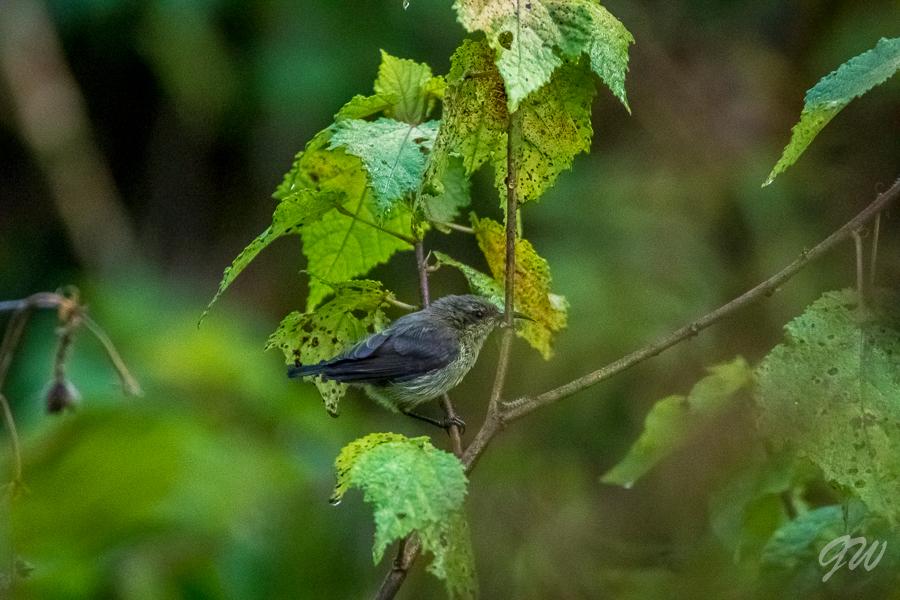 Miluji noční druhy ptáků, a proto pro mě bylo naprosto dechberoucí.